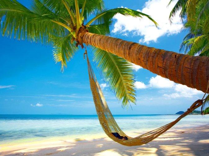 330676__tropical-hammock_p