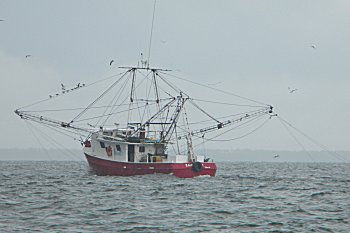 shrimpboat2010